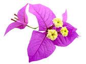 Santa Ritas Flowers