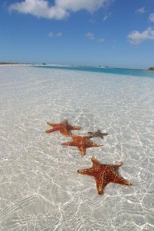 Sea star at the sand bottom (2)