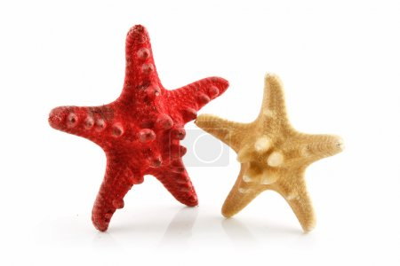 Two Colored Seashells Starfishes Isolate