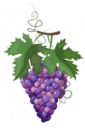Illustration pour Branche de raisin - image libre de droit