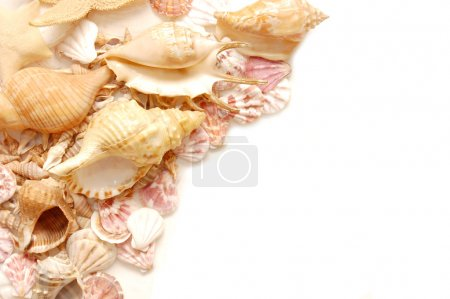 Photo for Different shells isolated on a white background - Royalty Free Image