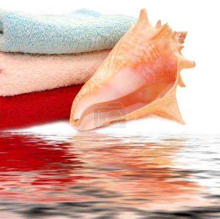 Very beautiful seashells on towel with reflexio
