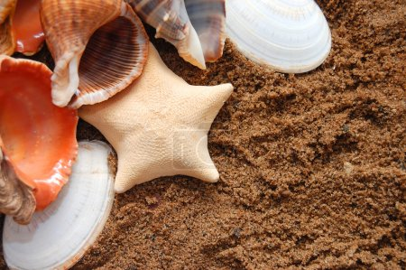 Starfish and seashells on golden sand