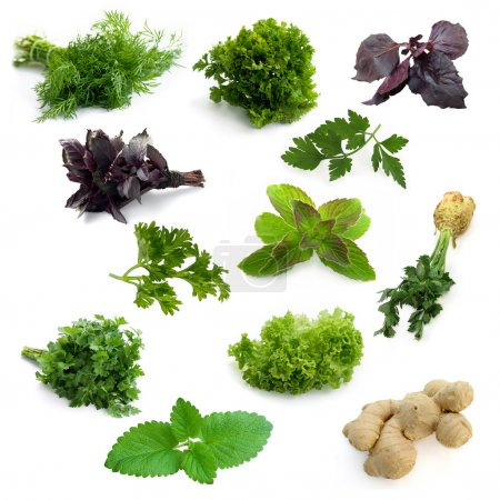 Photo for Set of aromatic herbs isolated on a white background - Royalty Free Image