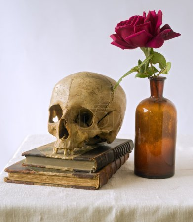 Skull on old books and rose