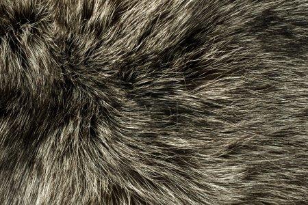 Closeup of polar Fox fur