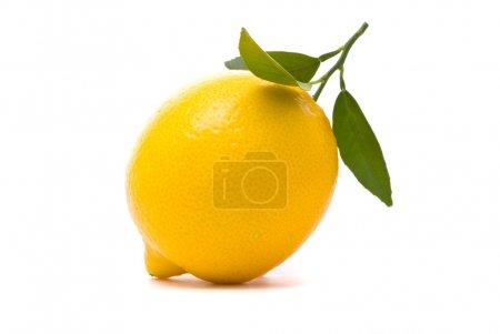 Photo for Lemon with fresh leaves. Macro shot. Studio white background. - Royalty Free Image
