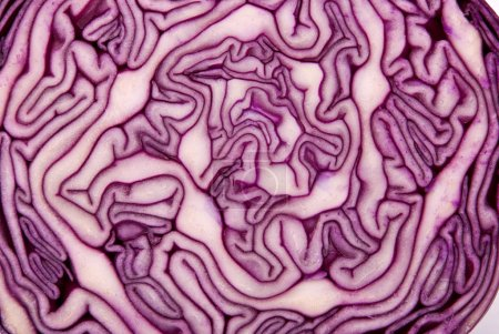 Photo for Close-up of a cut red cabbage - Royalty Free Image
