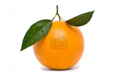 Photo pour Orange douce. studio macro tourné sur fond blanc. - image libre de droit