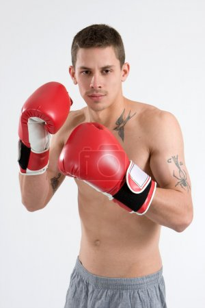 Tattooed Boxer
