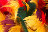 Colorful parrot feather background