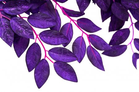 Violet leaves isolated