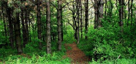 Photo pour Sentier de la forêt cachée - image libre de droit