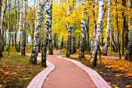 Foto de Callejón en el parque otoño - Imagen libre de derechos