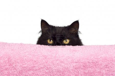 Photo pour Cacher le chat noir - image libre de droit