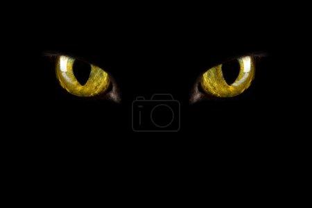 Photo pour Yeux de chat de brille dans l'obscurité. fond d'Halloween - image libre de droit