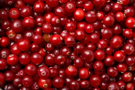 Photo for Red cranberries background - Royalty Free Image
