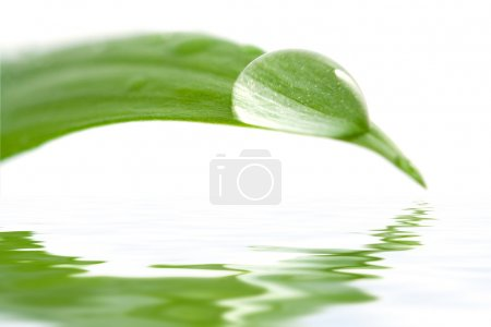Water drop on a leaf reflecting in water