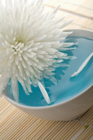 White flower floating in bowl