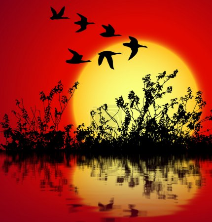Photo for Landscape on sunset with silhouette birds flying - Royalty Free Image