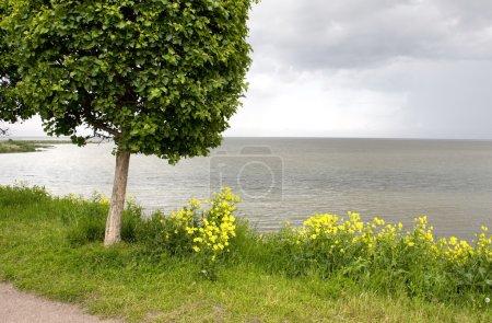 Single Tree on the Seashore