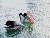 Příroda - pelikáni, rybaření na jezeře