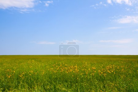 Photo for Green field and blue sky for background - Royalty Free Image