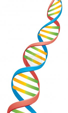 Illustration for Vector illustration of a Double Helix DNA Strand. - Royalty Free Image