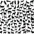 Lots of silhouettes of different breeds of dogs in...