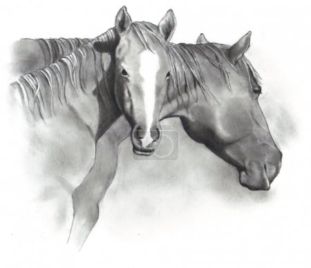 Drawing of Horse and Foal