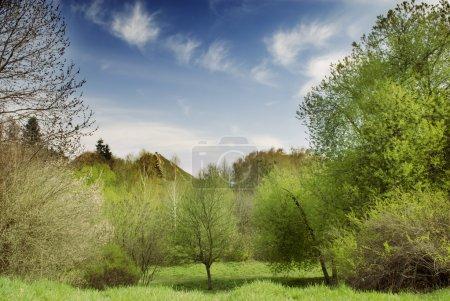Photo pour Beau paysage naturel printanier avec ciel bleu et nuages - image libre de droit