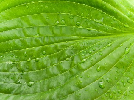 Photo for Green leaf with water drops on it - Royalty Free Image