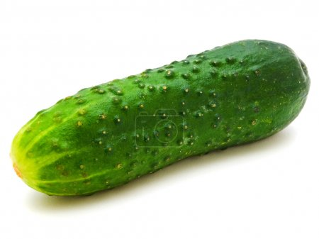 Photo for Photo of the single cucumber against the white background - Royalty Free Image