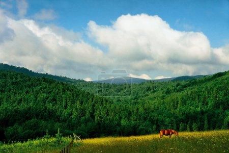 Beautiful Carpathians landscape at morning...