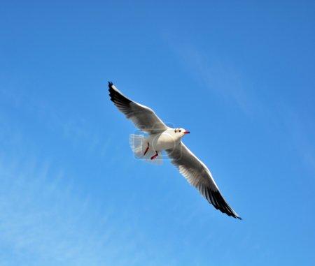 Photo pour Oiseaux de mer - image libre de droit