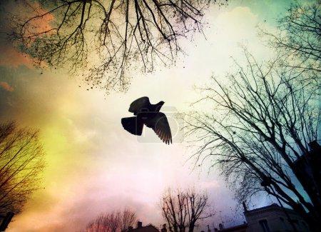 Photo pour ...Le ciel n'a pas la même couleur .... A piece of France - image libre de droit