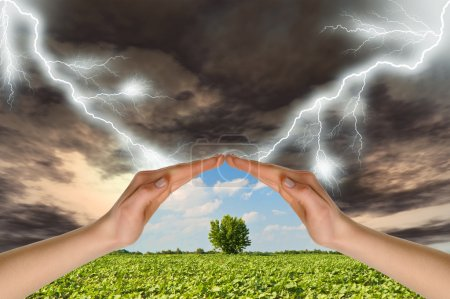 Two hands preserve a green tree against a thunder-...