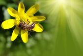 Makro včela