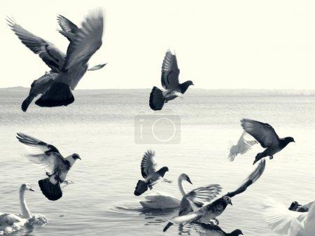 Photo pour Oiseaux en vol. Photo monochrome dramatique et scindée . - image libre de droit