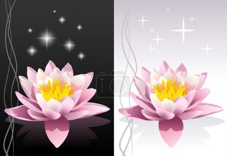 Illustration for Detailed vector lotus flower with reflection on black and white abstract oriental backgrounds - Royalty Free Image