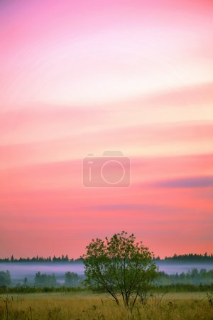 Photo for Sunset in the summer field with grass and flowers - Royalty Free Image