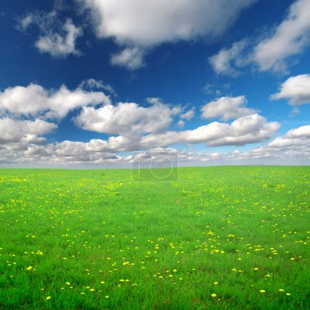 Yellow flowers field under blue cloudy s