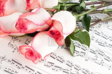 Photo pour Rose rose sur une feuille de musique. - image libre de droit