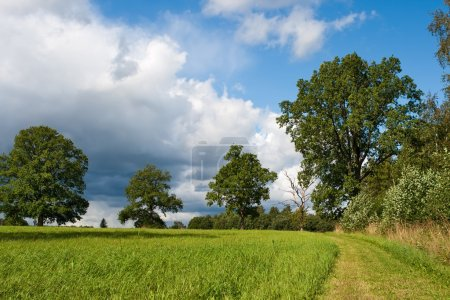 Photo for Green field, trees and rural road - Royalty Free Image