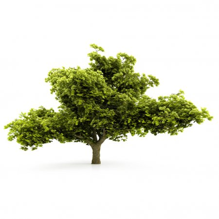 Photo for Tree isolated on a white background - Royalty Free Image