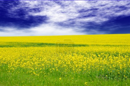 Green field with yellow flowers