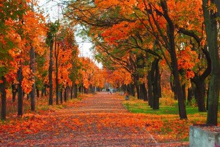 Foto de Parque de otoño - Imagen libre de derechos