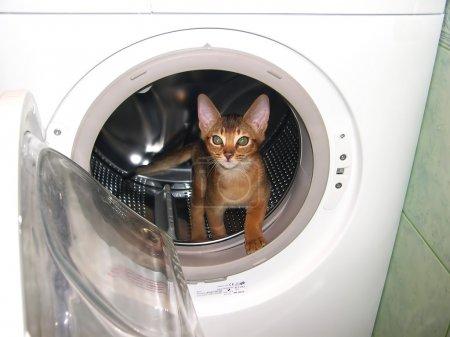 Cat in the washingmachine