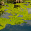 Fragment of deserted pond with duckweed...