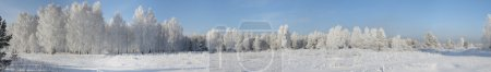 Foto de Panorama de madera en el invierno en día helada - Imagen libre de derechos